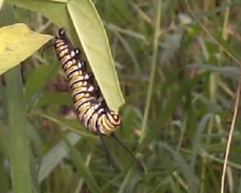 ddb17b52f570 Caterpillars and Plants